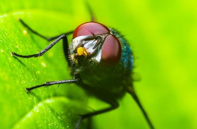 השיטה הכי מוצלחת להרחקת חרקים