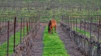מרהיב: החיות המשוטטות באזור רמת הגולן