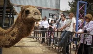 תיירות גוש עציון בחול המועד אילוסטרציה - חופשה של בני חורין: כבר מכירים את גוש עציון?