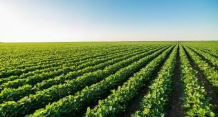 החקלאים יקבלו פיצויים. אילוסטרציה