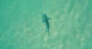 מבט מהרחפן: כרישים בשפך נחל חדרה
