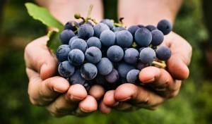 אכלו ענבים לא שטופים ולקו בהרעלה קשה