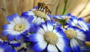 מדוע גם האדם וגם הדבורים מעדיפים את הצבע הכחול?