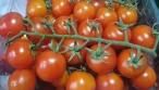 לא תאמינו: גם עגבניות א' א' - נגועות • צפו