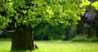 בדקו: מה העץ שלכם אומר עליכם?