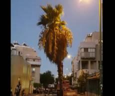 העץ הגבוה שנצמד לבנין - הוסר ונלקח • צפו