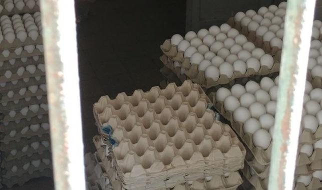 אלפי ביצים מוברחות נתפסו בדירה בי-ם
