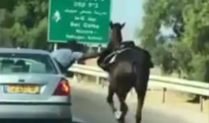 """הניסעה המסוכנת וההתגרות בסוס - בדואים מסכנים חיים ב""""תחרות"""" עם סוס. צפו"""