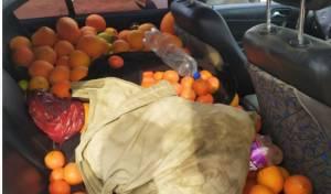 הפירות והירקות שנתפסו
