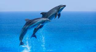עור דולפין: טרנד היופי החדש שחובה להכיר