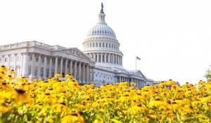 היום: הסנאט ידון ב'חוק איראן'