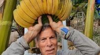 צפו בזן הבננות החדש בעל המראה הייחודי