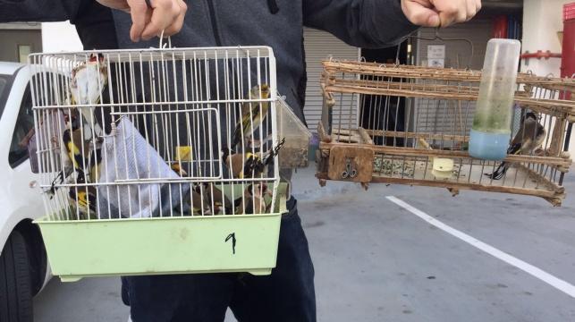 נעצרו שלושה גנבי תוכים וציפורים יקרות