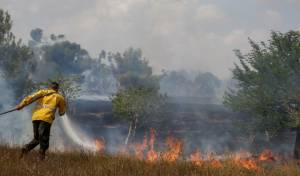 מחצית משטחי יערות בארי וכיסופים, נשרפו