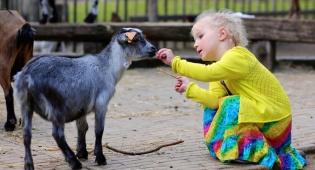 טיפול לילדים נוער באמצעות בעלי חיים. אילוסטרציה - לשבור חומות: לטפל בילדים בעזרת בעלי חיים
