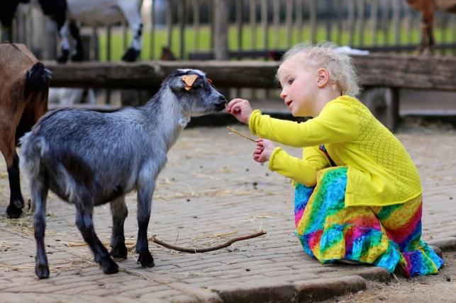טיפול לילדים נוער באמצעות בעלי חיים. אילוסטרציה