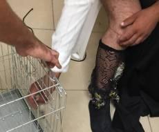 החוחיות מוצאות מהגרביונים של הפלסטיני