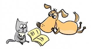 חתולים או כלבים: מי החכם ביותר?