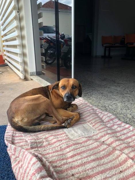 הכלב הנאמן - כולו לב: נאמנות הכלב לבעלים שמת