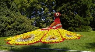 טווס פרחים - אי הפרחים - גלריה אירופאית מרהיבה במיוחד