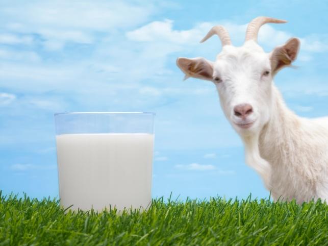 חלב עיזים