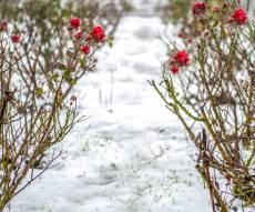 מרהיב: השלג ברמת הגולן ובאתר החרמון