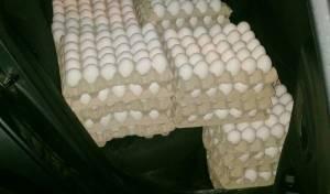 כ-4,200 ביצים לא חוקיות נתפסו בדרכם לי-ם