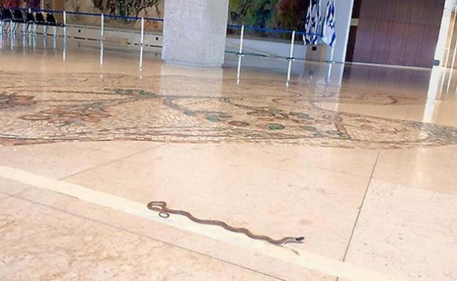 הנחש במשכן הכנסת, הבוקר
