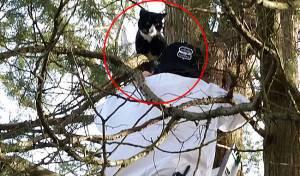 המתנדבים החרדים חילצו את החתול של הגוי • צפו