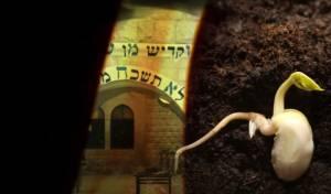 יצחק דֹב ויוחאי אלימלך רווה: את צמח דוד
