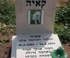 המצבה של נתניהו על קבר הכלבה קאיה