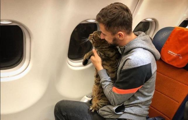 גאלין והחתולה השמנה