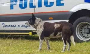 הכלב האמיץ - בת 3 ניצלה בזכות נאמנותו של כלב זקן ועיור
