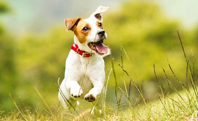 כלב גמיש במיוחד ועוד אחד שטובע בדשא; סרטונים ויראליים