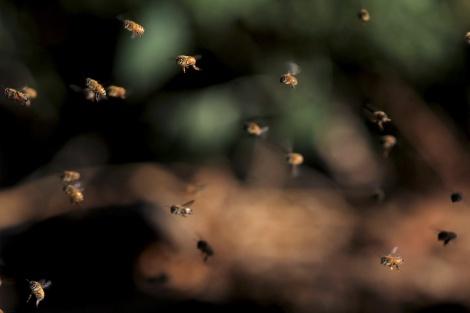 דבורים. ארכיון