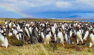 לכל המרבה במחיר: האי פבל מוצע למכירה