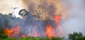 שריפה באמזונס, ארכיון
