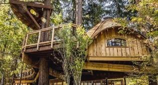 בתי העץ של מיקרוספט - במיקרוסופט בנו לעובדים בתי עץ במתחם החברה