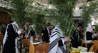 ג'רי, הערבה שלי // שמעון ברייטקופף
