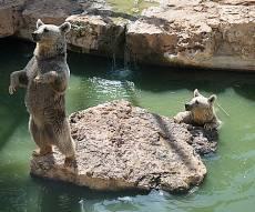 """ביקור מצולם בגן החיות התנכ""""י • צפו בגלריה"""