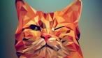 אילוסטרציה - פני חתול בתוכנה גרפית