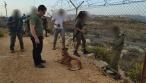 חיילים, כלבים ורחפנים: חשש לחדירה ב'תפוח'