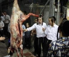 החסידים שחטו את הכבש לכבוד ראש השנה