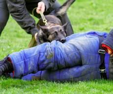 פינוי אחד הנערים - כלב של נער גבעות נשך קצין במהלך פינוי