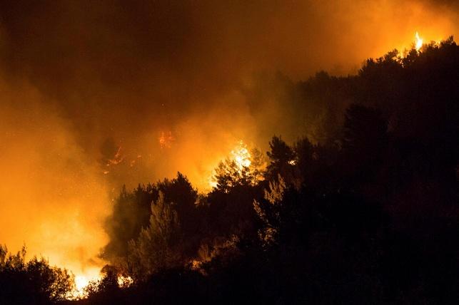 מבקר המדינה החל בבדיקה ראשונית של גל השריפות
