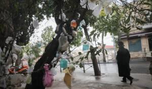 מדוע העץ 'קושט' בעשרות שקיות תלויות