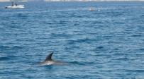 דולפינן נצפה לבדו בחוף הצפוני באילת