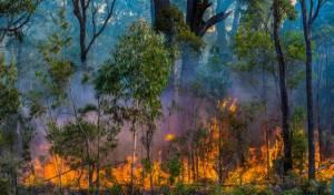 אוסטרליה בוערת: 4,000 איש בתוך הלהבות