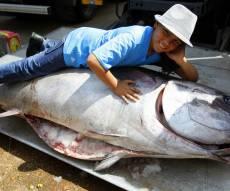 דג טונה, ארכיון