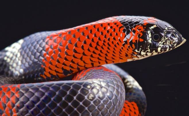 האם שמיכות צמר הן הפתרון למכת הנחשים?